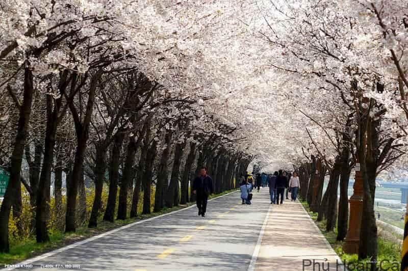 Anyang Hàn Quốc - Thành phố thu hút sinh viên Việt bậc nhất Hàn Quốc