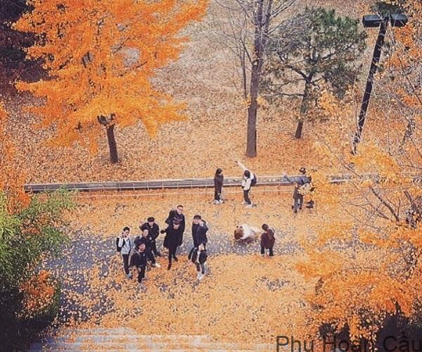 Đại học Tongmyong thu hút nhiều sinh viên quốc tế