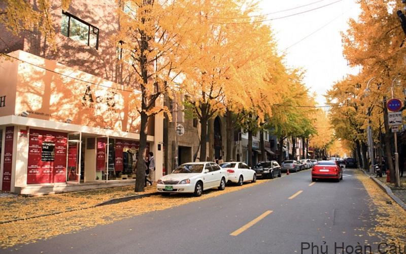 thông tin đường garosugil Hàn Quốc