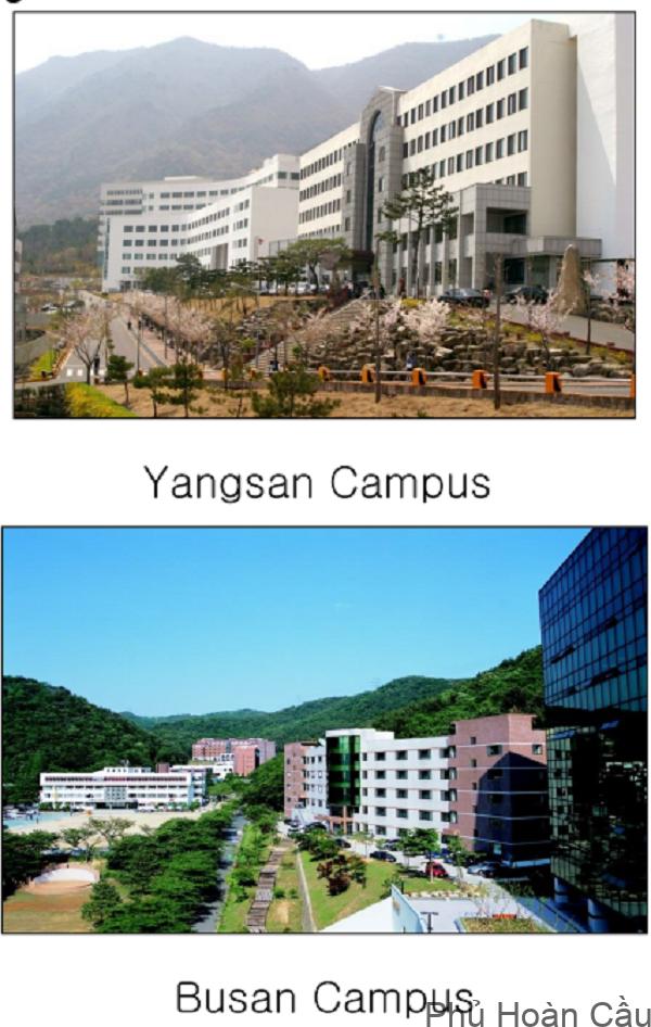 Hai cơ sở chính của Đại học Youngsan