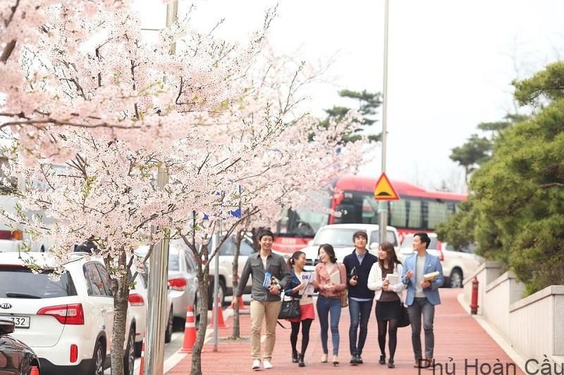 Du học Hàn Quốc là lựa chọn của rất nhiều bạn trẻ Việt Nam.