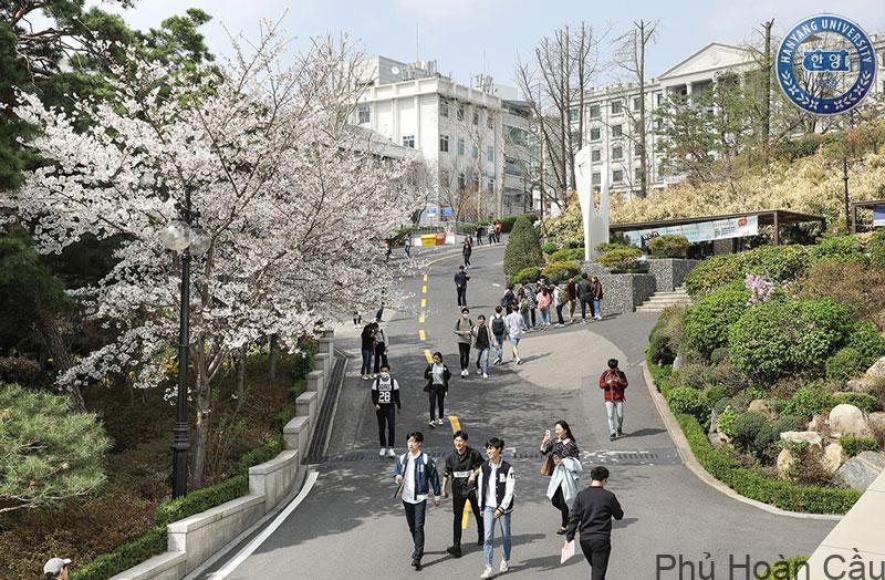 Trường Hanyang có nhiều chương trình, khóa học để sinh viên lựa chọn