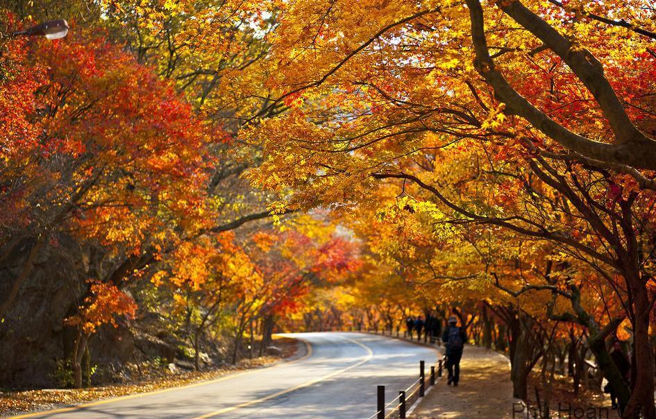 Núi Naejangsan - điểm lý tưởng ngắm mùa thu Hàn Quốc