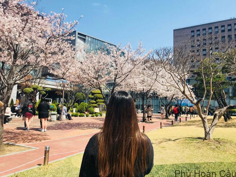 Mùa hoa anh đào tại trường đại học Soongsil