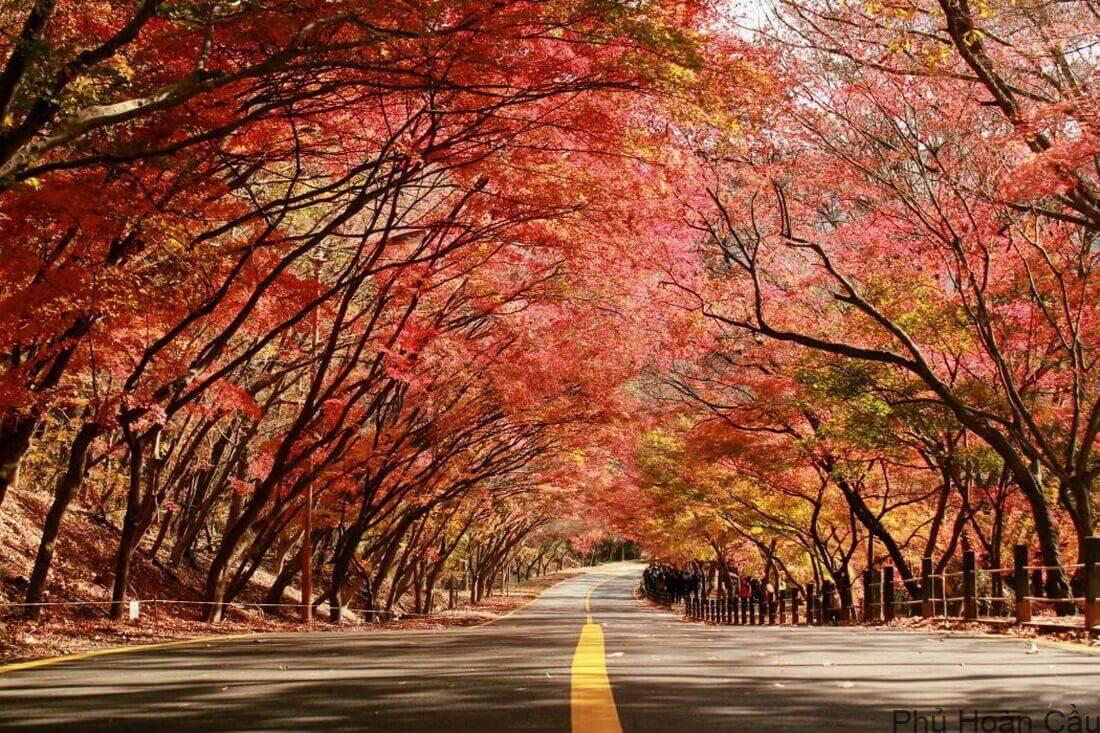 Lá phong phủ đầy ở Naejangsan
